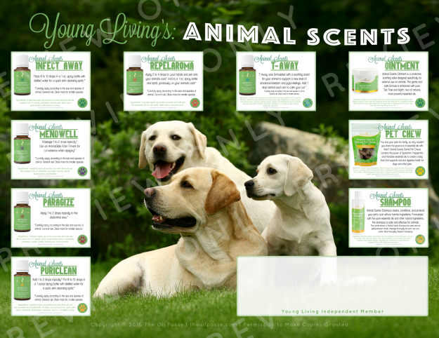 preview_animalscents_flyer