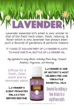 SUMMER-Lavender_EventCards