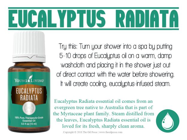 EucalyptusRadiata_LoveItShareIt